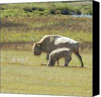 Bison Canvas Prints - White Buffalo Canvas Print by Ernie Echols