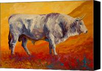 Ranching Canvas Prints - White Bull Canvas Print by Marion Rose