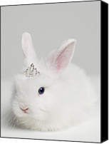 Fantasy Photo Canvas Prints - White Bunny Rabbit Wearing Tiara, Close Up, Studio Shot Canvas Print by Roger Wright