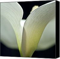 Tropical Plants Canvas Prints - White Calla Lily Canvas Print by Heiko Koehrer-Wagner