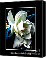 Theaceae Canvas Prints - White Camellia Canvas Print by Rose Santuci-Sofranko