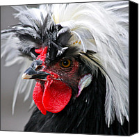 Exotic Bird Canvas Prints - White Crested Black Polish Cockerel Canvas Print by Karon Melillo DeVega