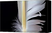 Closeup Canvas Prints - White Feather Canvas Print by Bob Orsillo