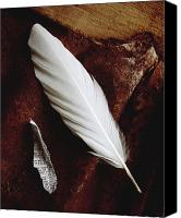 Found Paper Canvas Prints - White feather Canvas Print by Greg Wright