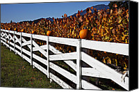 Fences Canvas Prints - White fence with pumpkins Canvas Print by Garry Gay