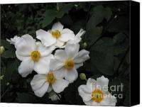Patricia Schnepf Canvas Prints - White flowers Canvas Print by Patricia  Schnepf