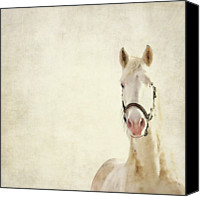 Bridle Canvas Prints - White Horse Canvas Print by Angie Johnson