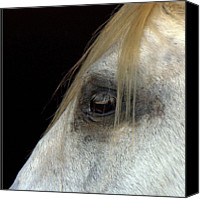 Animal Head Shot Canvas Prints - White Horse Canvas Print by Marmimuralla