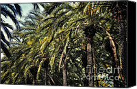 Tropical Plants Canvas Prints - White hot sun and cool shade Canvas Print by Joan Carroll
