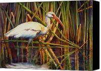 Ibis Canvas Prints - White Ibis Canvas Print by Sue Zimmermann