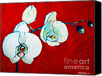 Macro Orchids Painting Canvas Prints - White Orchid Canvas Print by Ana Maria Edulescu