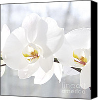 Still Life Canvas Prints - White Orchid Canvas Print by Cindy Lee Longhini