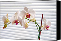 Orchidaceae Mixed Media Canvas Prints - White Orchids on White Canvas Print by Ari Salmela