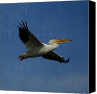 White Pelican Canvas Prints - White Pelican DE 2 Canvas Print by Ernie Echols