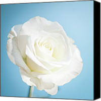 Rose Photography Canvas Prints - White Rose Canvas Print by Peter Chadwick LRPS