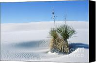 National Monument Canvas Prints - White Sands Dune and Yuccas Canvas Print by Sandra Bronstein