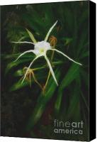 Spider Lily Canvas Prints - White Spider Lily Painting Canvas Print by M K  Miller