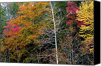 Gatlinburg Canvas Prints - White Tree Fall Colors  Canvas Print by Rich Franco