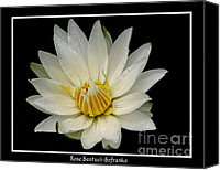 Father Christmas Canvas Prints - White Waterlily Canvas Print by Rose Santuci-Sofranko