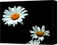 Daisies Pyrography Canvas Prints - White Wild Daisies Canvas Print by Gaynor Perkins