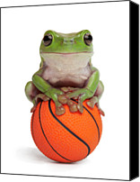 Basketball Canvas Prints - Whites Tree Frog On Small Basketball Canvas Print by American Images Inc
