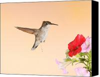 Ruby Throated Canvas Prints - Whiz Kid Canvas Print by Gerry Sibell