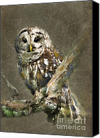 Barred Owl Canvas Prints - Whoooo Canvas Print by Betty LaRue