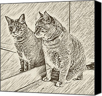 Animals Canvas Prints - Whos That Kitty In The Mirror Canvas Print by David G Paul
