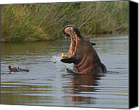 Hippopotamus Canvas Prints - Wide Open Canvas Print by Tony Beck