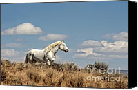 Wild Stallion Canvas Prints - Wild and Free Canvas Print by Heather Swan