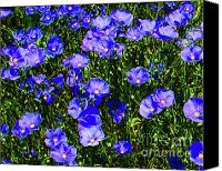 Flower Photograph Canvas Prints - Wild Blue Canvas Print by Terril Heilman
