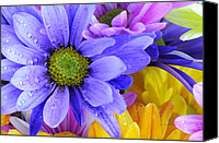 Kenny Canvas Prints - Wild Crazy Daisies 2 Canvas Print by Kenny Francis