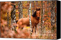 Stallion Canvas Prints - Wild Canvas Print by Evgeni Dinev