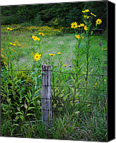 Wild-flower Canvas Prints - Wild Flower Fence Canvas Print by Robert Harmon