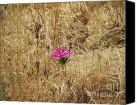 Patricia Schnepf Canvas Prints - Wild Flower Canvas Print by Patricia  Schnepf
