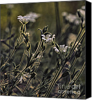 Macro Photography Canvas Prints - Wild flowers Canvas Print by Kristin Kreet