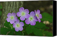 Wild Geranium Canvas Prints - Wild Geranium Flowers Canvas Print by Jim Vansant