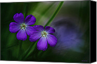 Wild Geranium Canvas Prints - Wild Geranium Canvas Print by Ron Jones
