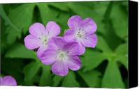Wild Geranium Canvas Prints - Wild Geranium Triplet  Canvas Print by Alan Lenk
