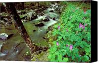 Wild Geranium Canvas Prints - Wild Geraniums on Bradley Fork Canvas Print by Alan Lenk