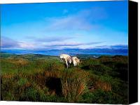 Dh Canvas Prints - Wild Horse, Bantry Bay, Co Kerry Canvas Print by The Irish Image Collection