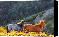Bulgaria Canvas Prints - Wild Horses Canvas Print by Evgeni Dinev
