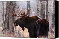 Bull Moose Canvas Prints - Wild in the Woods Canvas Print by Ann  Van Breemen