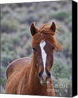 Wild Horse Pyrography Canvas Prints - Wild Mustang Canvas Print by David Martorelli