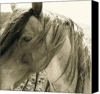 Wild Horse Pyrography Canvas Prints - Wild  Canvas Print by Tess  Marie