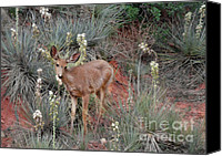 Mule Deer Canvas Prints - Wild Times at Garden of the Gods Colorado Canvas Print by Christine Till
