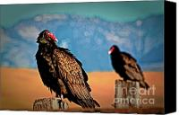 Turkey Photo Canvas Prints - Wild Turkey Buzzards Canvas Print by Gus McCrea