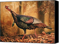 Turkey Painting Canvas Prints - Wild Turkey Canvas Print by Hans Droog