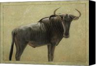 Animal Drawings Canvas Prints - Wildebeest Canvas Print by James W Johnson