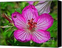Wild Geranium Canvas Prints - Wildflower Geranium Caespitosum - Purple Wild Geranium Canvas Print by Photography Moments - Sandi